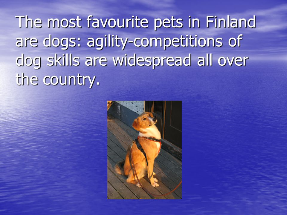 The most favourite pets in Finland are dogs: agility-competitions of dog skills are widespread all over the country.