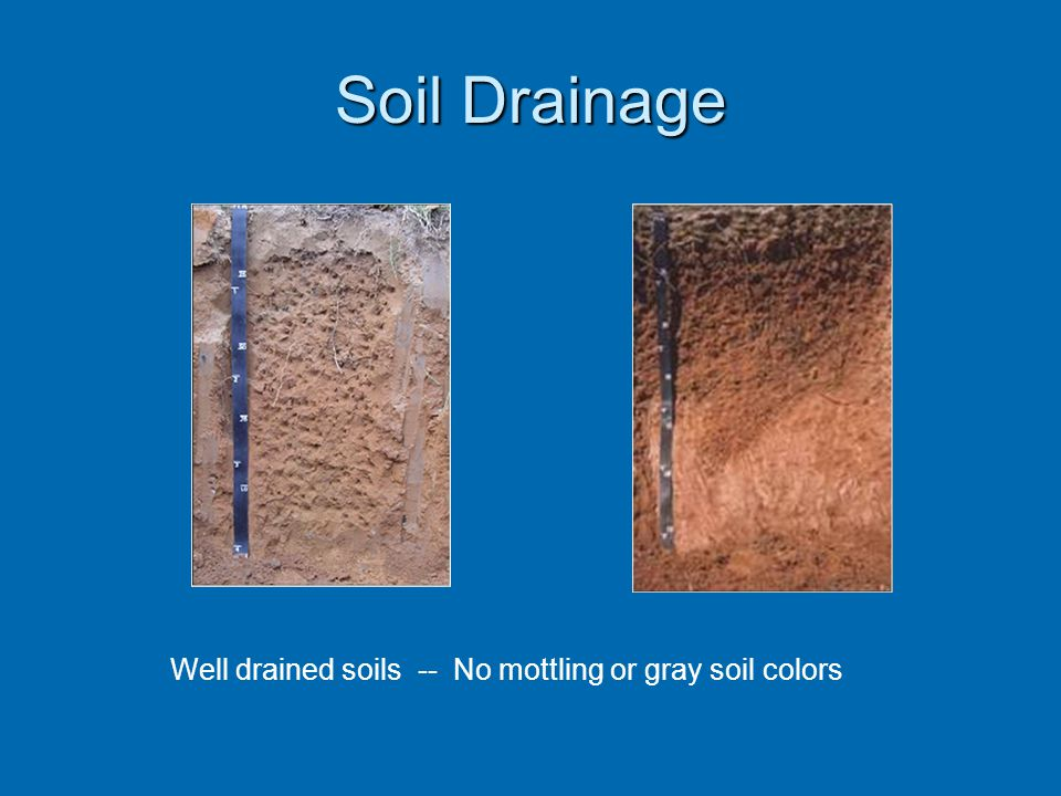 Soil Drainage Well drained soils -- No mottling or gray soil colors