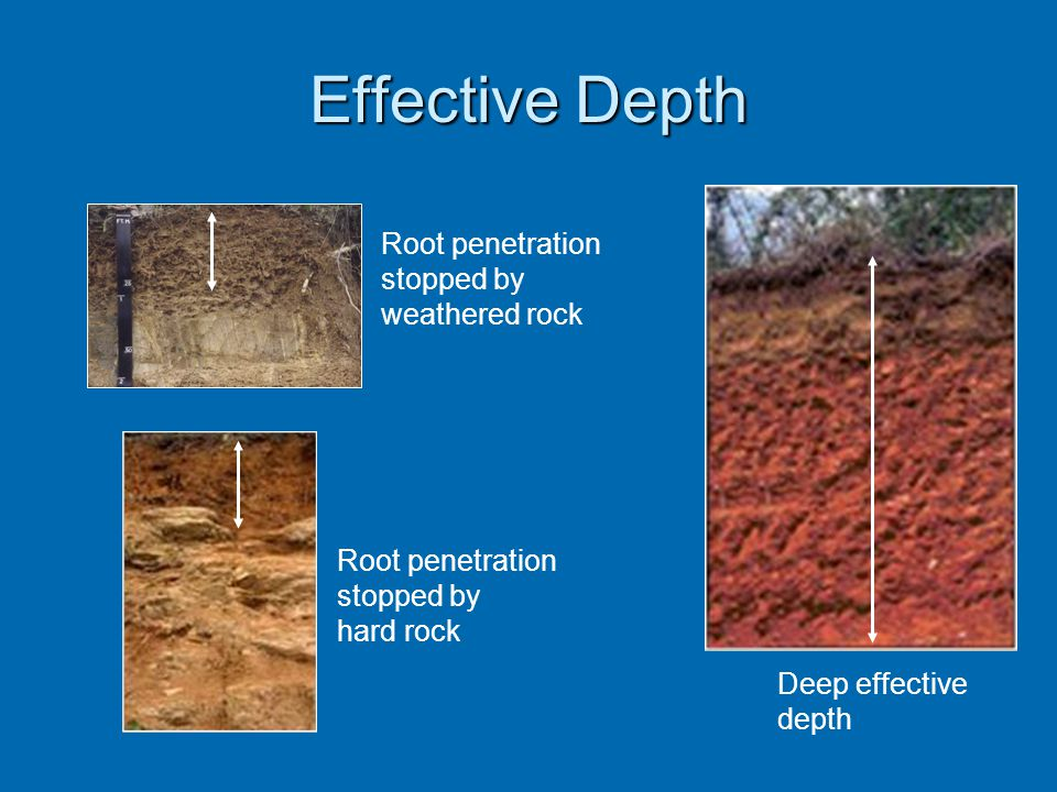 Effective Depth Deep effective depth Root penetration stopped by weathered rock Root penetration stopped by hard rock