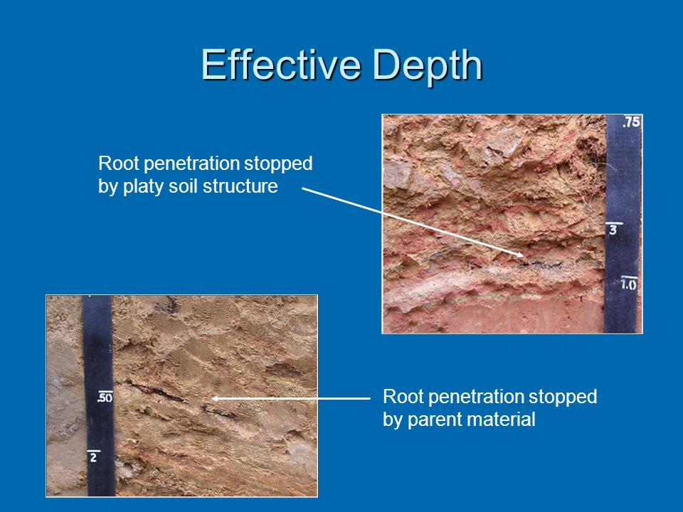 Effective Depth Root penetration stopped by platy soil structure Root penetration stopped by parent material