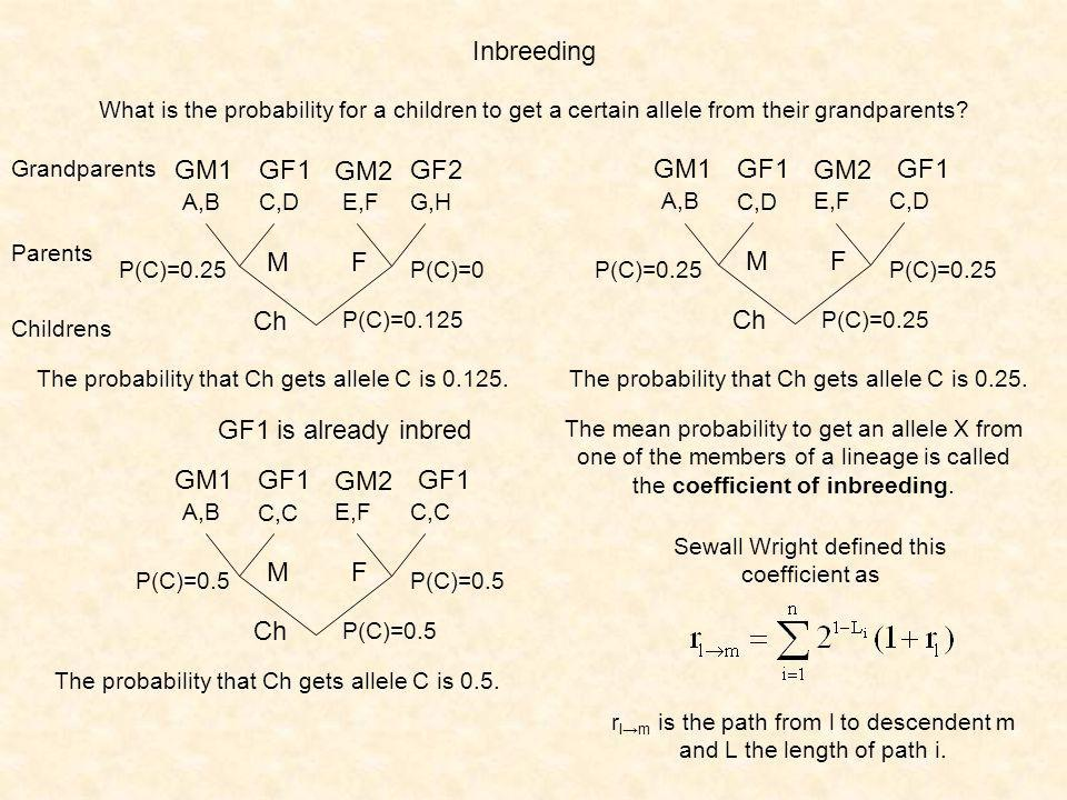 Inbreeding GM1GF1GF2 A,BC,DG,H Grandparents Parents Childrens GM2 E,F MF Ch The probability that Ch gets allele C is 0.125.