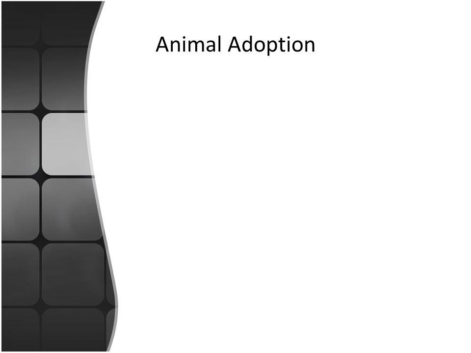 Animal Adoption