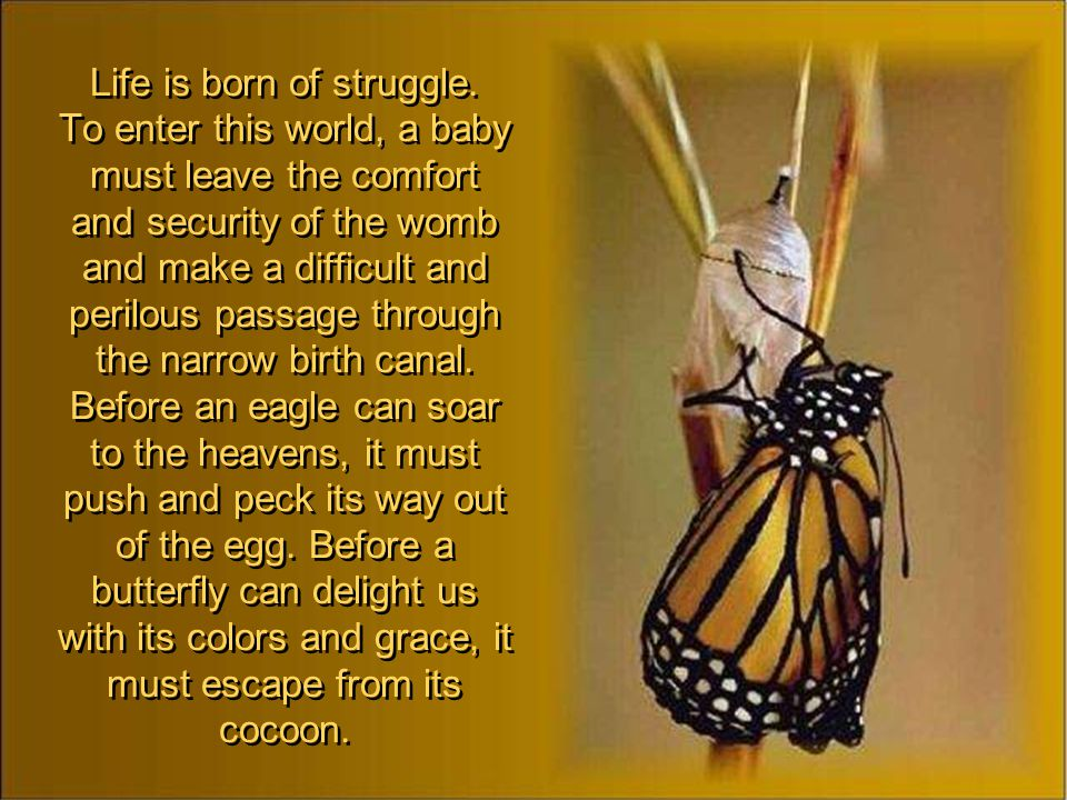 Life is born of struggle.