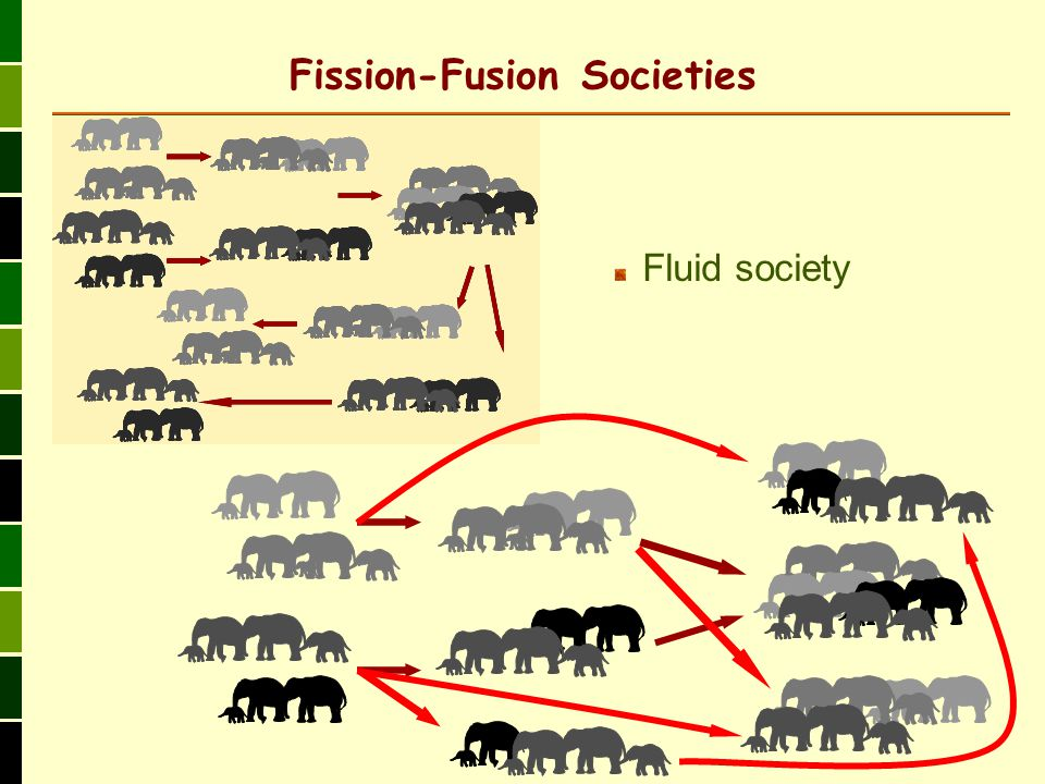 Fission-Fusion Societies Fluid society