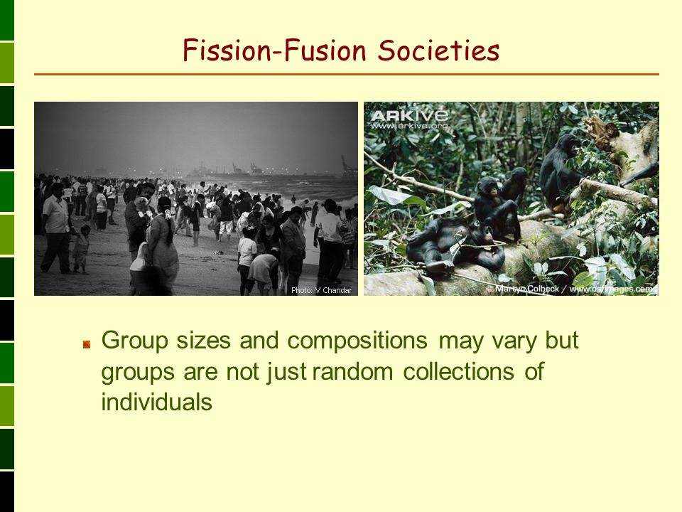 Fission-Fusion Societies Group sizes and compositions may vary but groups are not just random collections of individuals