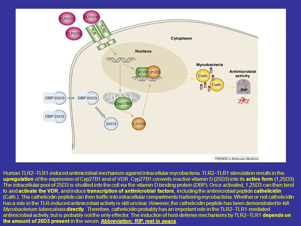 Human TLR2–TLR1-induced antimicrobial mechanism against intracellular mycobacteria.