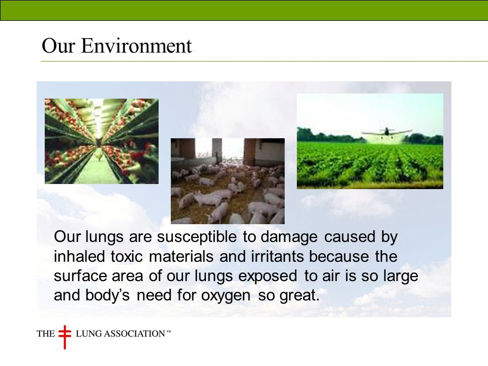 Our Environment Our lungs are susceptible to damage caused by inhaled toxic materials and irritants because the surface area of our lungs exposed to air is so large and bodys need for oxygen so great.
