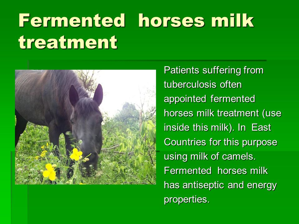 Fermented horses milk treatment Patients suffering from tuberculosis often appointed fermented horses milk treatment (use inside this milk).