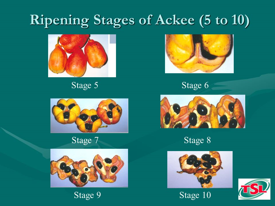 Ripening Stages of Ackee (5 to 10) Stage 5 Stage 7 Stage 9 Stage 6 Stage 8 Stage 10