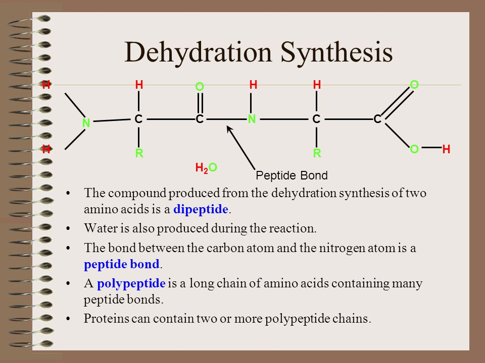 Dehydration Synthesis The compound produced from the dehydration synthesis of two amino acids is a dipeptide.