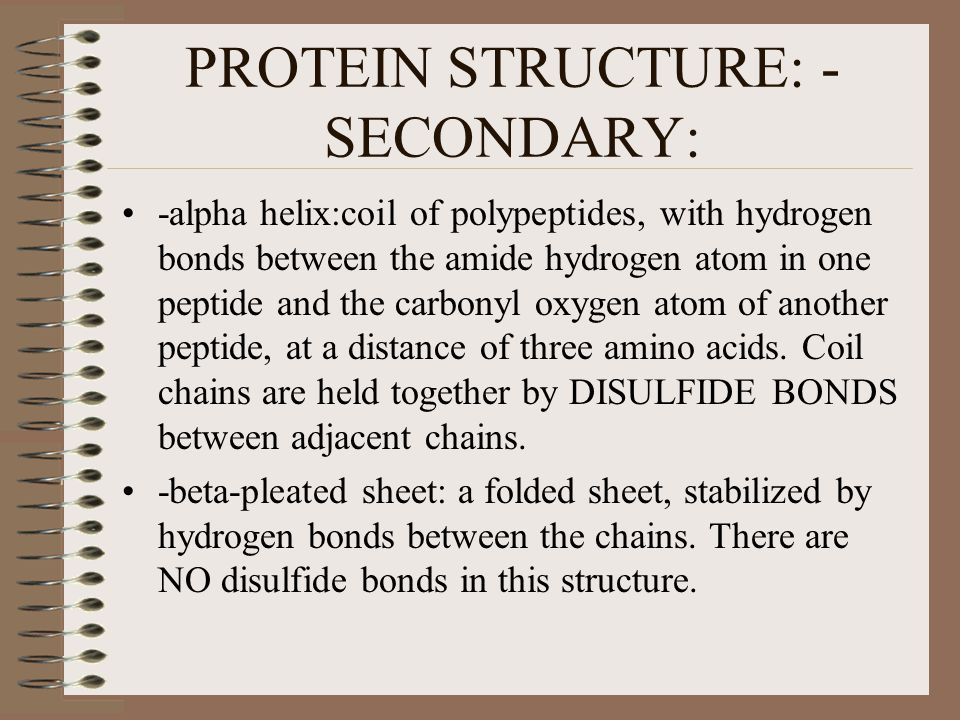 PROTEIN STRUCTURE: - SECONDARY: -alpha helix:coil of polypeptides, with hydrogen bonds between the amide hydrogen atom in one peptide and the carbonyl oxygen atom of another peptide, at a distance of three amino acids.