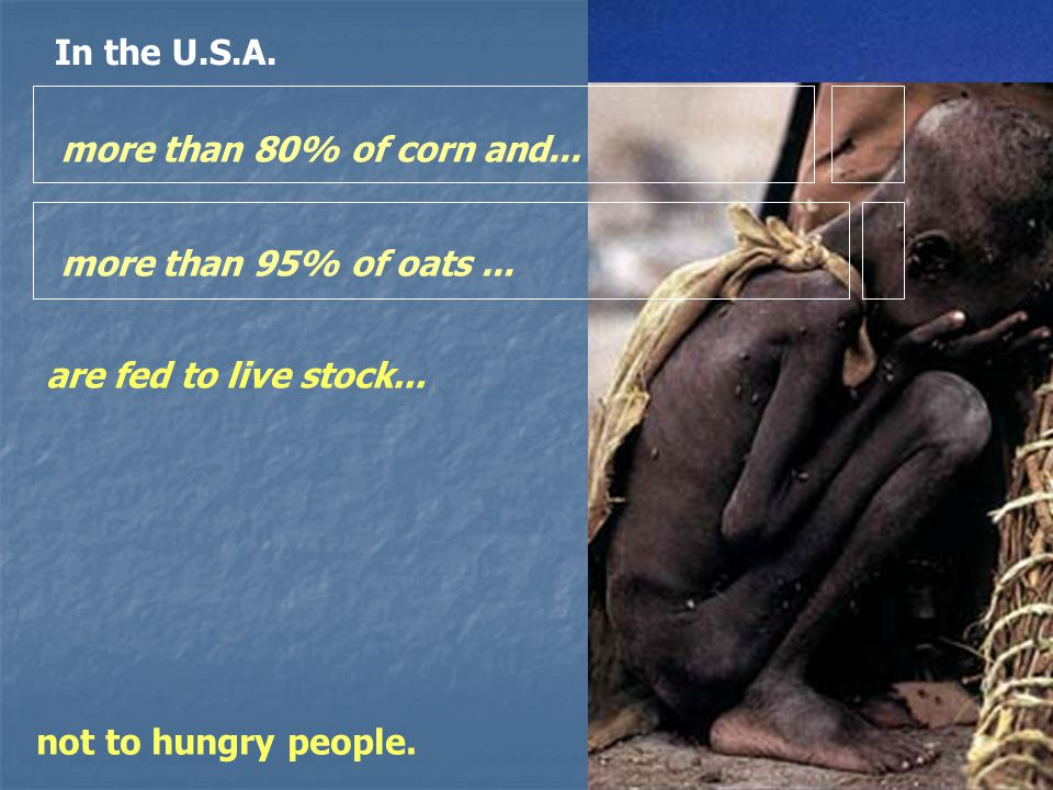more than 80% of corn and... more than 95% of oats...