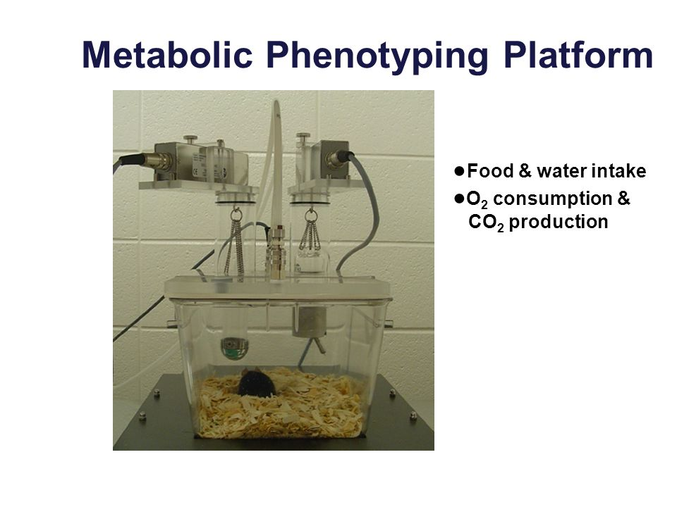 Metabolic Phenotyping Platform Food & water intake O 2 consumption & CO 2 production