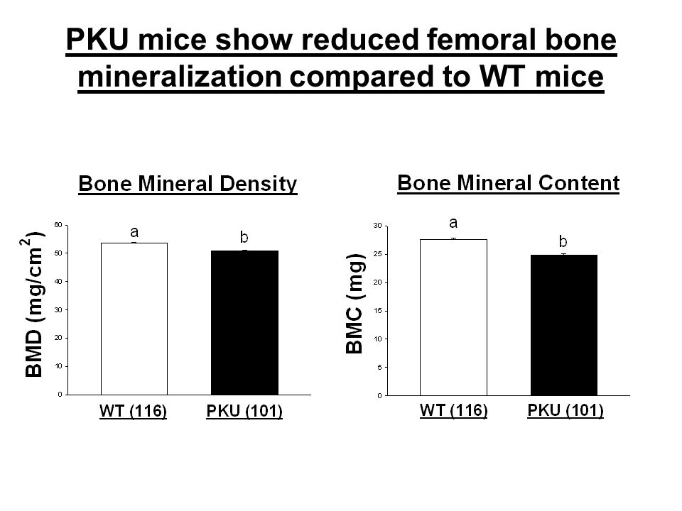 PKU mice show reduced femoral bone mineralization compared to WT mice