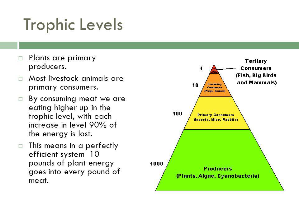 Trophic Levels Plants are primary producers. Most livestock animals are primary consumers.