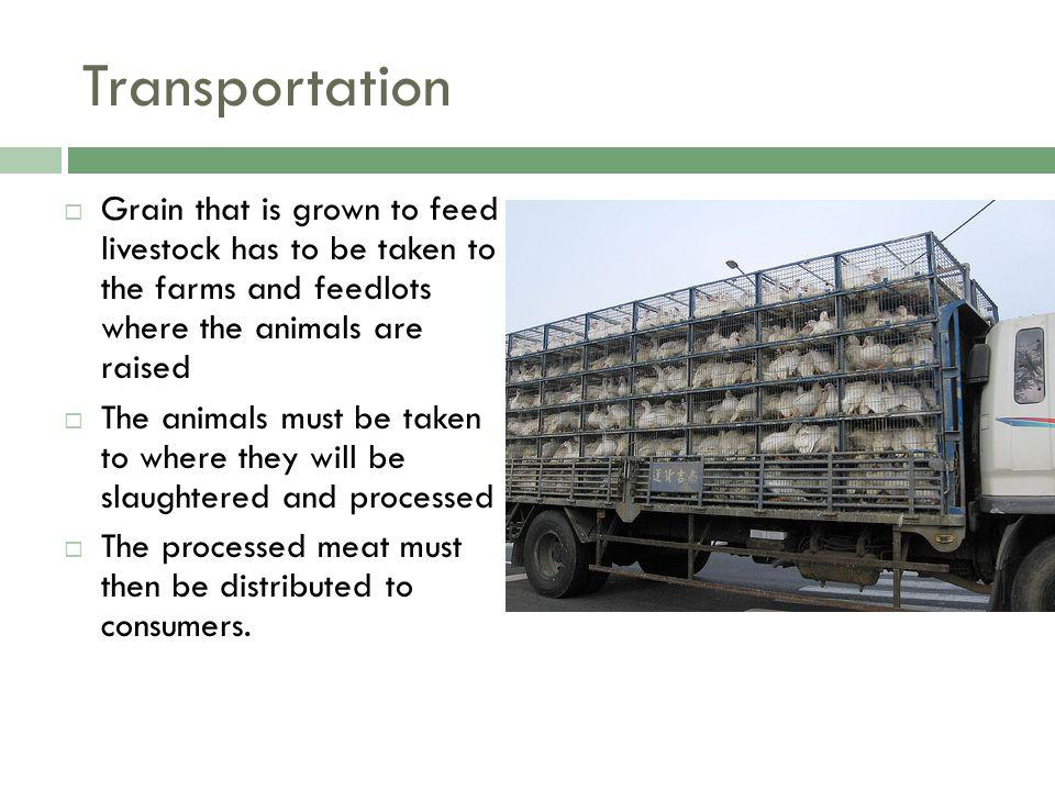 Transportation Grain that is grown to feed livestock has to be taken to the farms and feedlots where the animals are raised The animals must be taken to where they will be slaughtered and processed The processed meat must then be distributed to consumers.