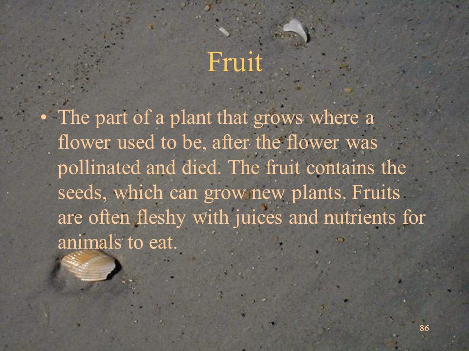 86 Fruit The part of a plant that grows where a flower used to be, after the flower was pollinated and died.