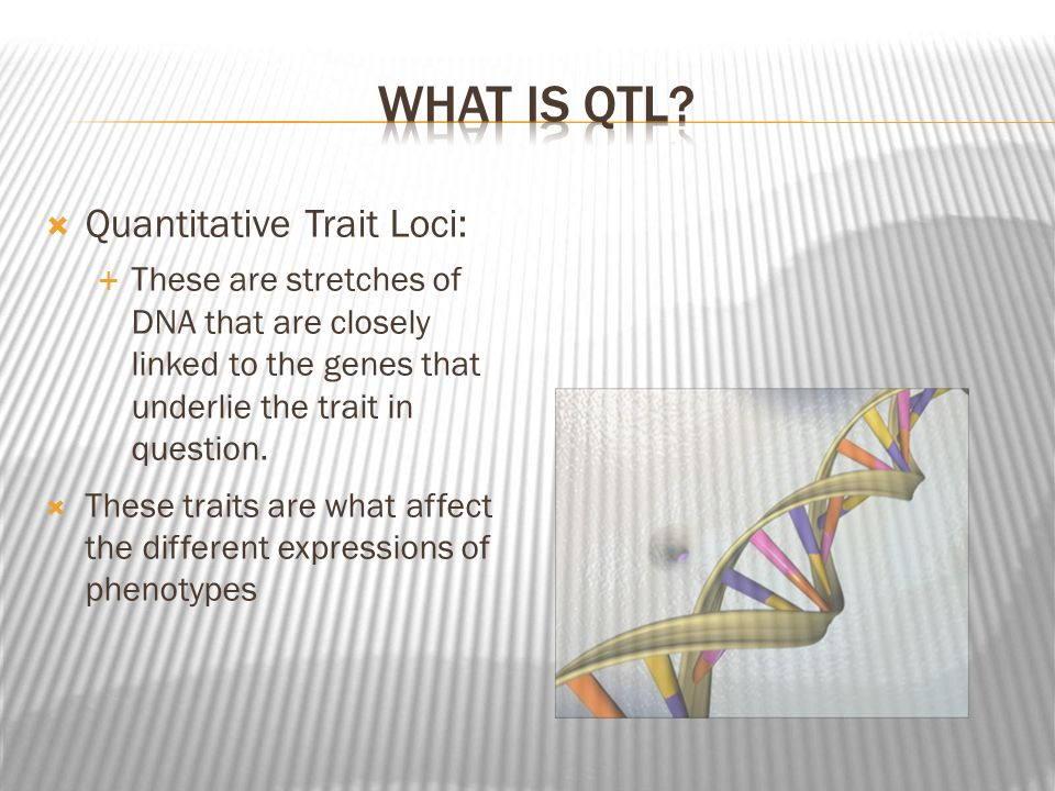 Quantitative Trait Loci: These are stretches of DNA that are closely linked to the genes that underlie the trait in question.