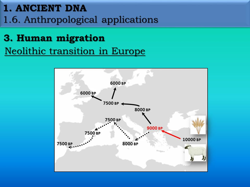 1. ANCIENT DNA 1.6. Anthropological applications 3.