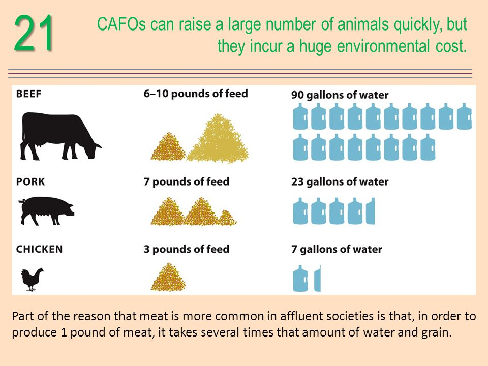 21 CAFOs can raise a large number of animals quickly, but they incur a huge environmental cost.