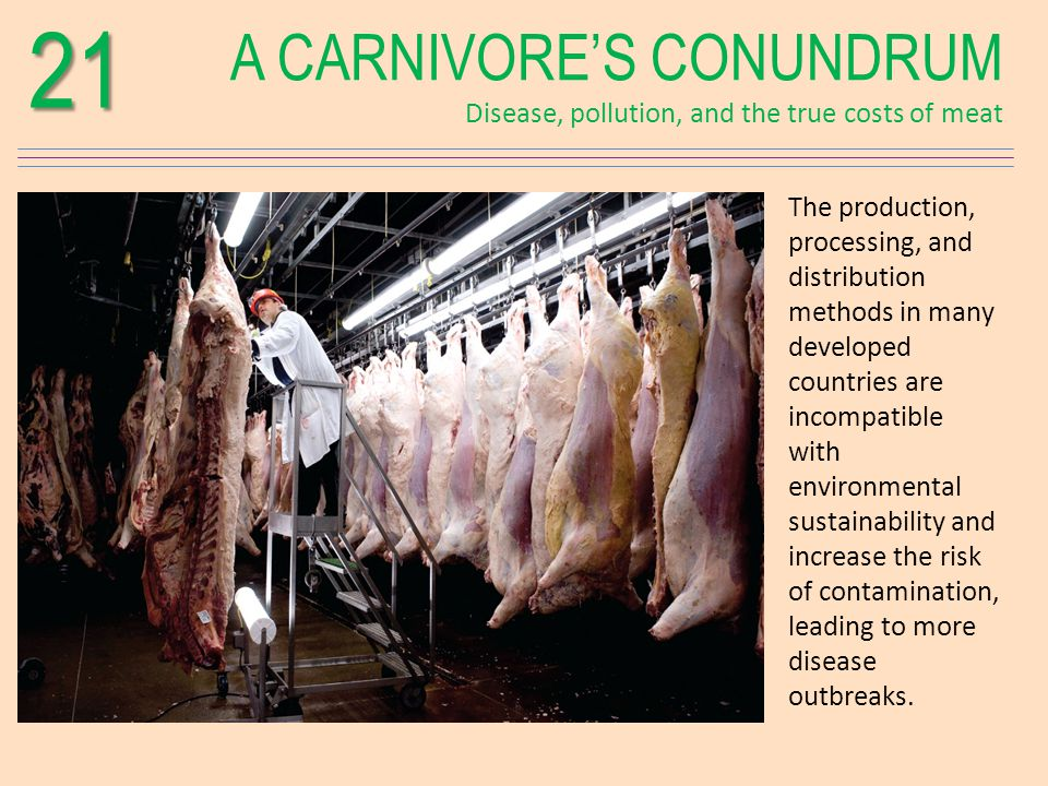 A CARNIVORES CONUNDRUM Disease, pollution, and the true costs of meat21 The production, processing, and distribution methods in many developed countries are incompatible with environmental sustainability and increase the risk of contamination, leading to more disease outbreaks.