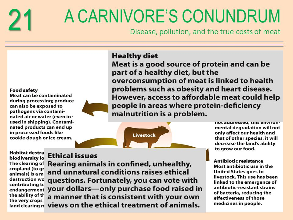 A CARNIVORES CONUNDRUM Disease, pollution, and the true costs of meat21