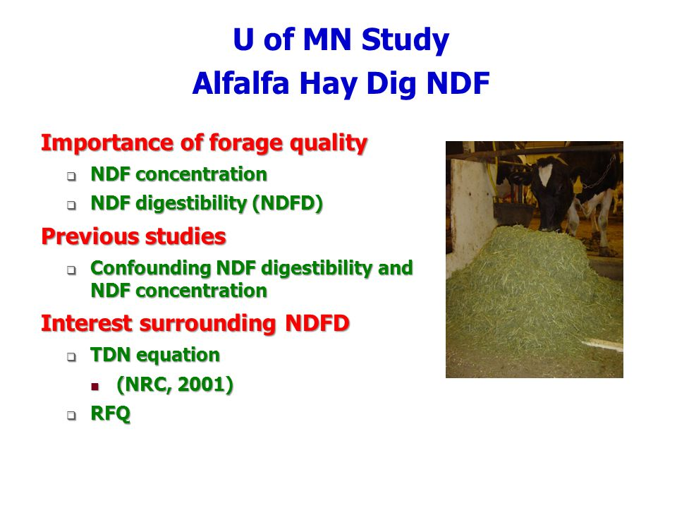 U of MN Study Alfalfa Hay Dig NDF Importance of forage quality NDF concentration NDF concentration NDF digestibility (NDFD) NDF digestibility (NDFD) Previous studies Confounding NDF digestibility and NDF concentration Confounding NDF digestibility and NDF concentration Interest surrounding NDFD TDN equation TDN equation (NRC, 2001) (NRC, 2001) RFQ RFQ