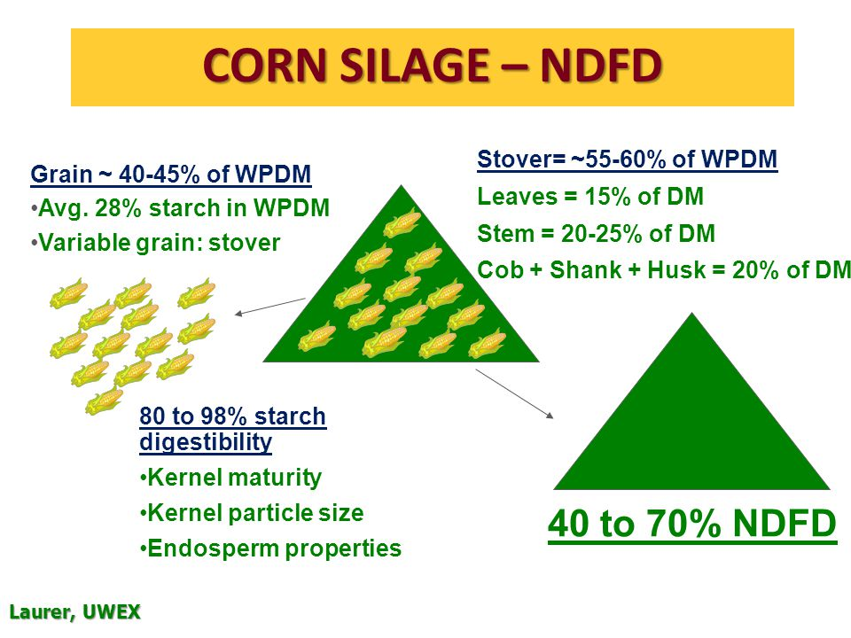 CORN SILAGE – NDFD 80 to 98% starch digestibility Kernel maturity Kernel particle size Endosperm properties 40 to 70% NDFD Grain ~ 40-45% of WPDM Avg.