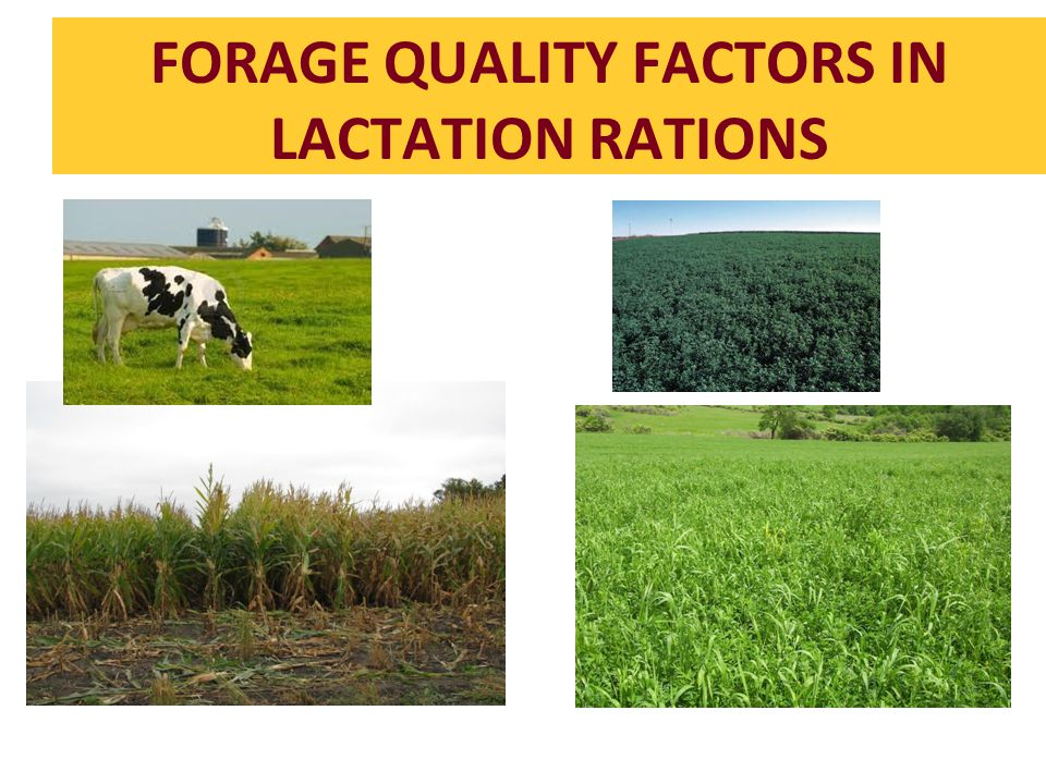 FORAGE QUALITY FACTORS IN LACTATION RATIONS