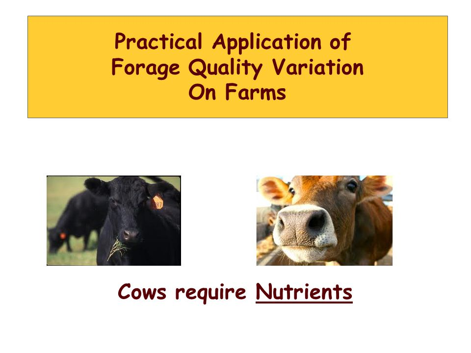 Practical Application of Forage Quality Variation On Farms Cows require Nutrients