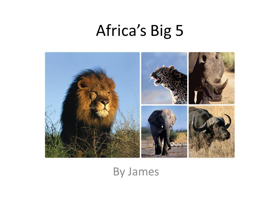 Africas Big 5 By James