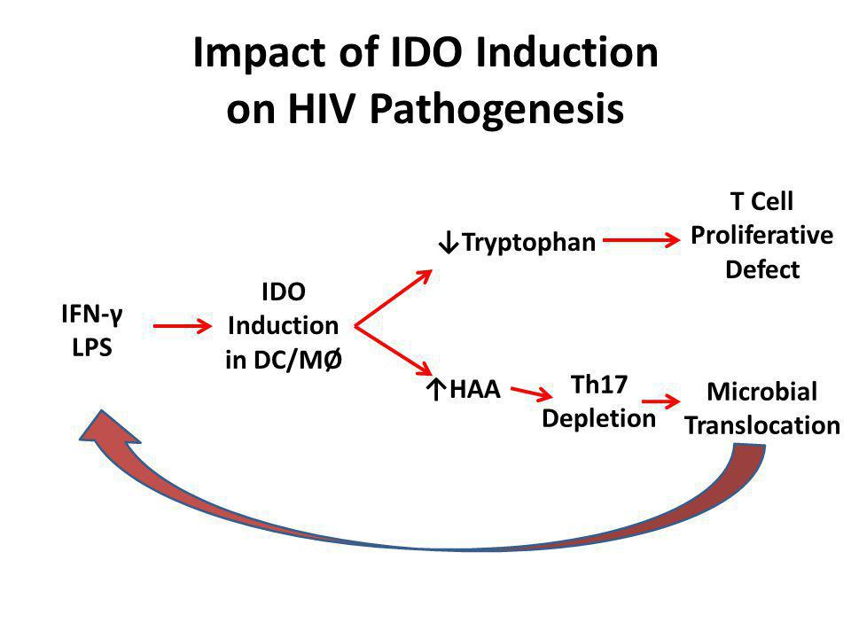 Impact of IDO Induction on HIV Pathogenesis IFN-γ LPS IDO Induction in DC/MØ Tryptophan T Cell Proliferative Defect Microbial Translocation HAA Th17 Depletion