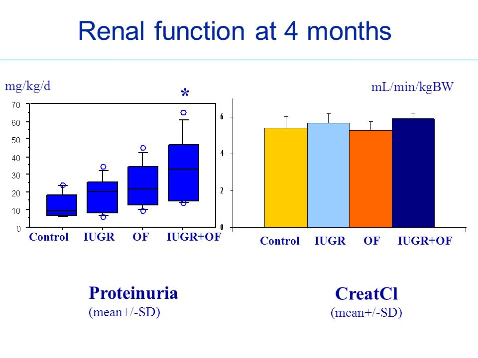 Control IUGR OF IUGR+OF Proteinuria (mean+/-SD) CreatCl (mean+/-SD) mg/kg/d Renal function at 4 months mL/min/kgBW *