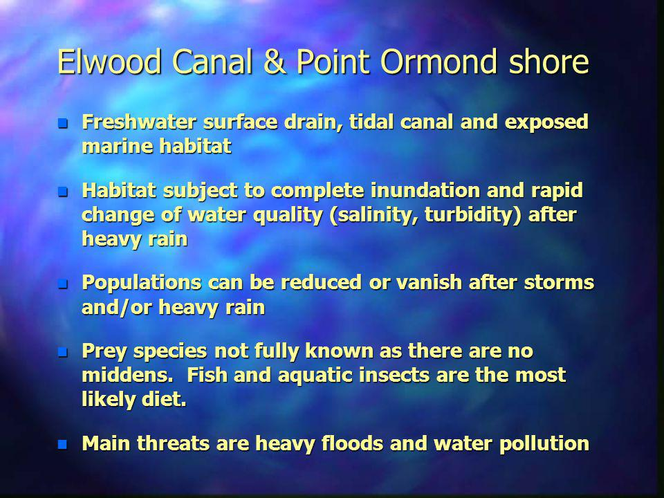 Elwood Canal & Point Ormond shore n Freshwater surface drain, tidal canal and exposed marine habitat n Habitat subject to complete inundation and rapid change of water quality (salinity, turbidity) after heavy rain n Populations can be reduced or vanish after storms and/or heavy rain n Prey species not fully known as there are no middens.