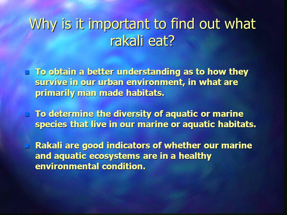 Why is it important to find out what rakali eat.