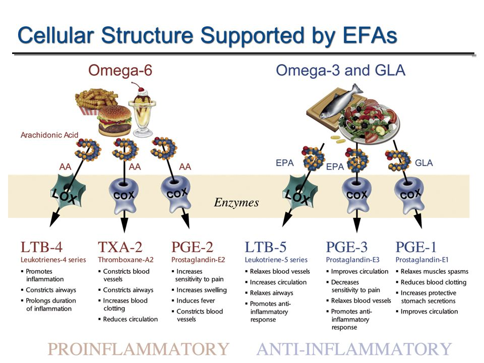 Temp-A.ppt 6/8/2014 7 7 Omega-3 Fish Oil: Applications and Emerging ResearchWith Stuart Tomc Cellular Structure Supported by EFAs 7