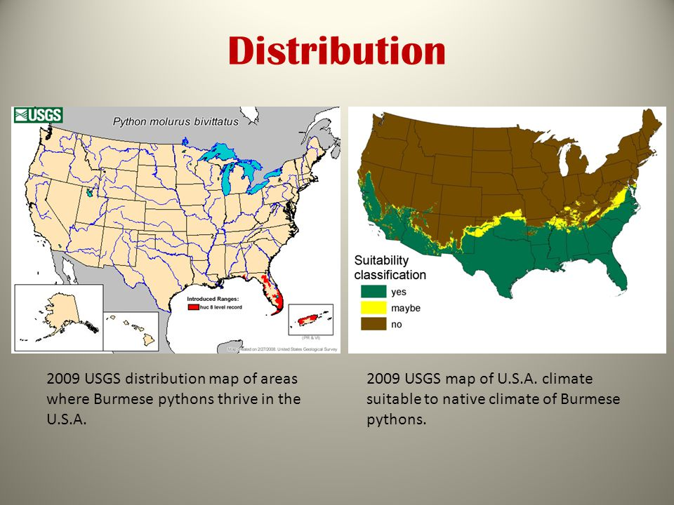 Distribution 2009 USGS distribution map of areas where Burmese pythons thrive in the U.S.A.