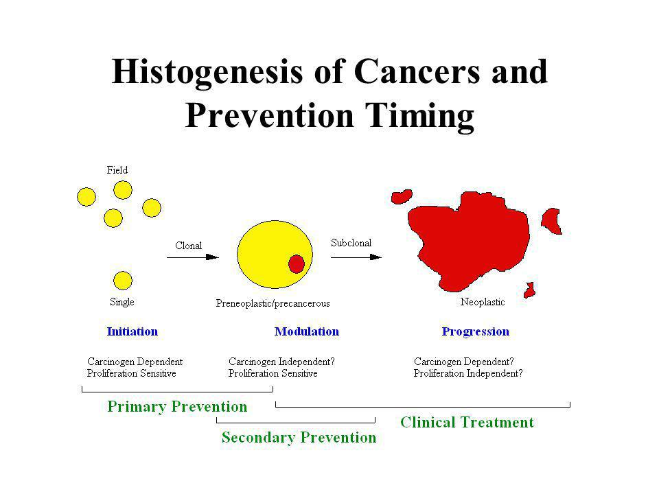 Histogenesis of Cancers and Prevention Timing