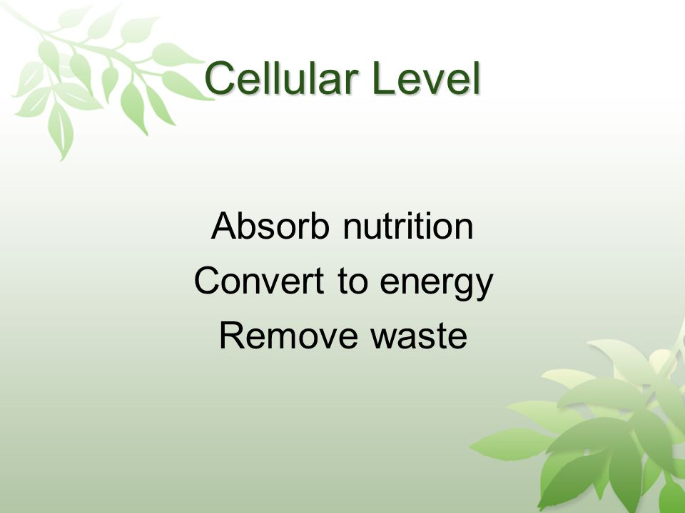 Cellular Level Absorb nutrition Convert to energy Remove waste