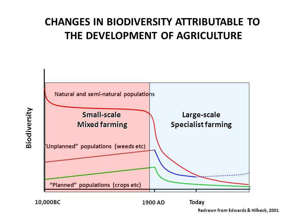 Biodiversity 10,000BC 1900 AD Today Natural and semi-natural populations Unplanned populations (weeds etc Unplanned populations (weeds etc ) Planned populations (crops etc) CHANGES IN BIODIVERSITY ATTRIBUTABLE TO THE DEVELOPMENT OF AGRICULTURE THE DEVELOPMENT OF AGRICULTURE Redrawn from Edwards & Hilbeck, 2001 Small-scale Mixed farming Large-scale Specialist farming