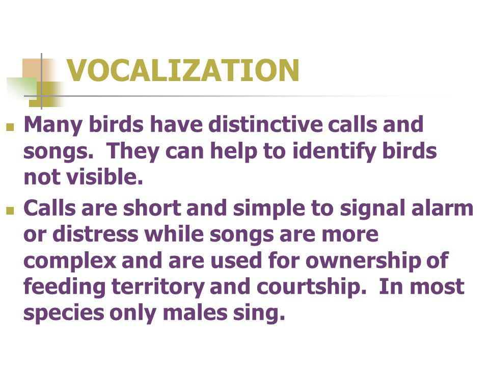 VOCALIZATION Many birds have distinctive calls and songs.