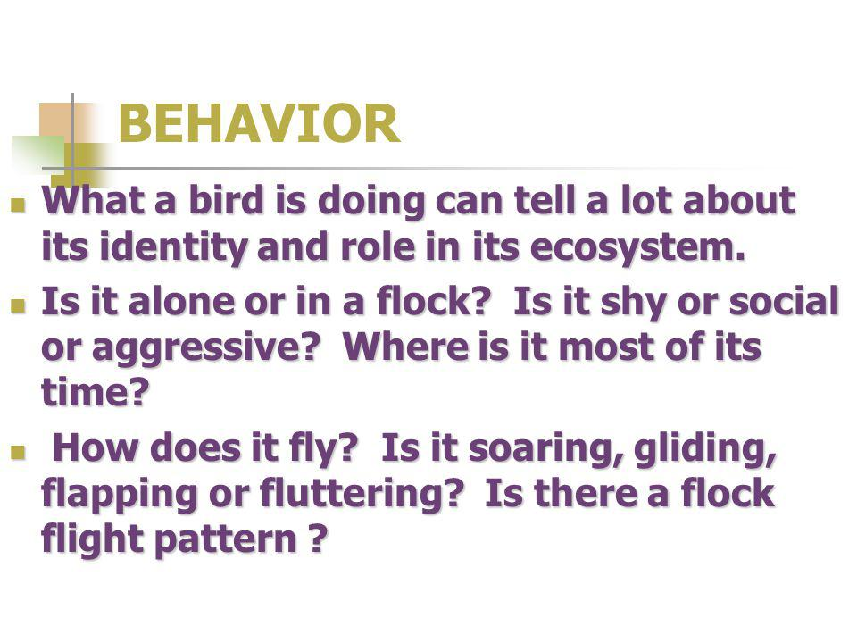 BEHAVIOR What a bird is doing can tell a lot about its identity and role in its ecosystem.