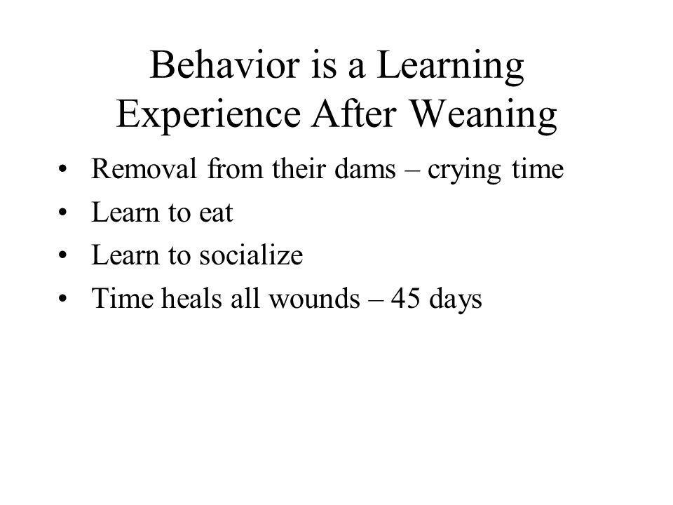 Behavior is a Learning Experience After Weaning Removal from their dams – crying time Learn to eat Learn to socialize Time heals all wounds – 45 days