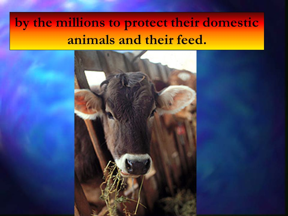 by the millions to protect their domestic animals and their feed.