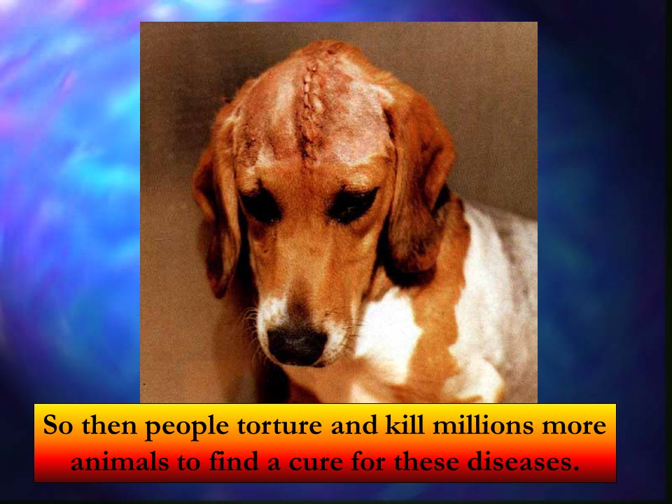 So then people torture and kill millions more animals to find a cure for these diseases.