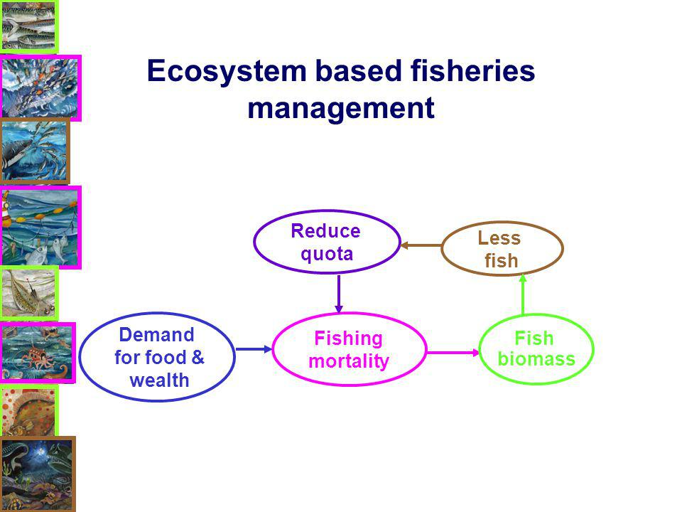 Reduce quota Fishing mortality Demand for food & wealth Less fish Fish biomass Ecosystem based fisheries management