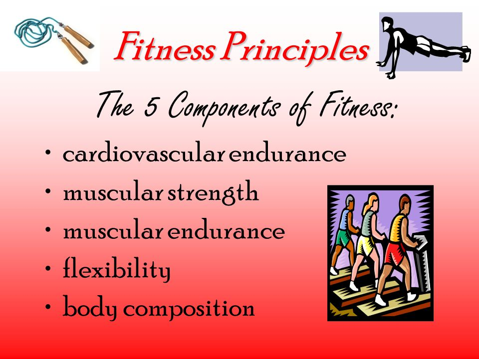 Fitness Principles The 5 Components of Fitness: cardiovascular endurance muscular strength muscular endurance flexibility body composition