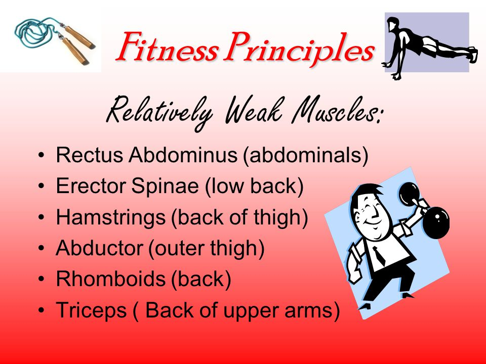 Fitness Principles Relatively Weak Muscles: Rectus Abdominus (abdominals) Erector Spinae (low back) Hamstrings (back of thigh) Abductor (outer thigh) Rhomboids (back) Triceps ( Back of upper arms)