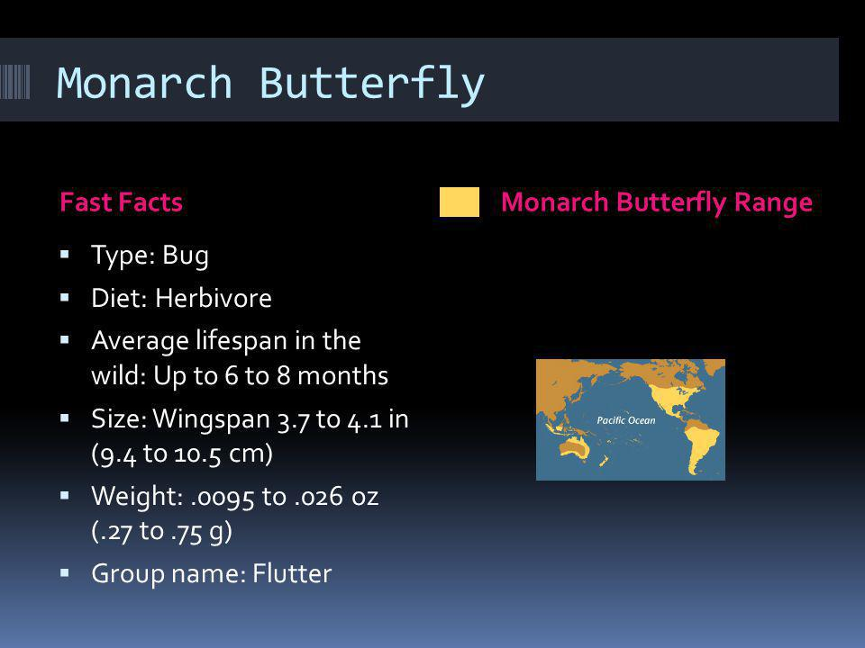 Fast FactsMonarch Butterfly Range Type: Bug Diet: Herbivore Average lifespan in the wild: Up to 6 to 8 months Size: Wingspan 3.7 to 4.1 in (9.4 to 10.5 cm) Weight:.0095 to.026 oz (.27 to.75 g) Group name: Flutter