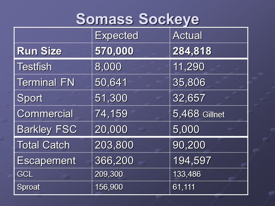 Somass Sockeye ExpectedActual Run Size 570,000284,818 Testfish8,00011,290 Terminal FN 50,64135,806 Sport51,30032,657 Commercial74,159 5,468 Gillnet Barkley FSC 20,0005,000 Total Catch 203,80090,200 Escapement366,200194,597 GCL209,300133,486 Sproat156,90061,111